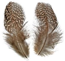 Argus Pheasant Body Feathers