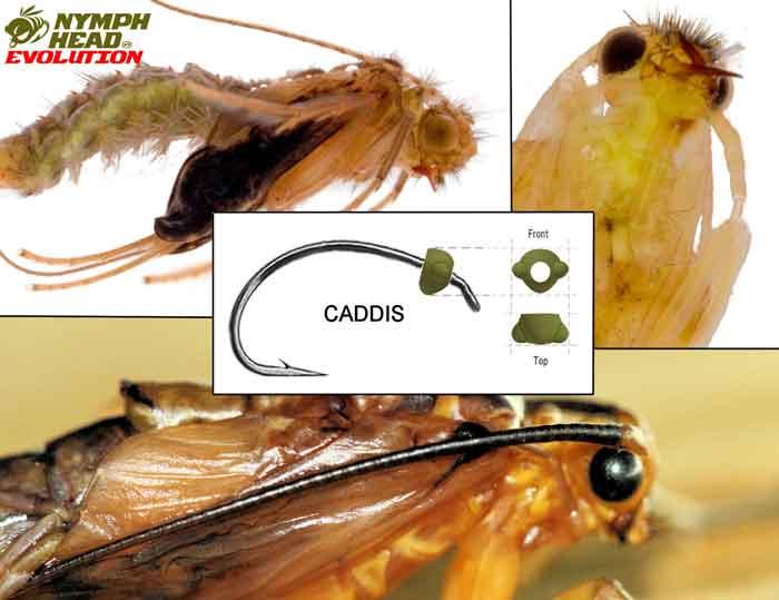 Caddis – Evolution Tungsten Bead Heads