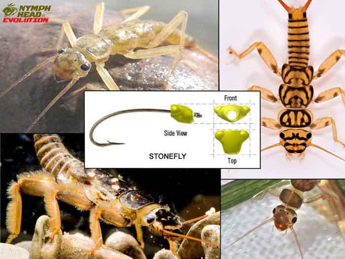 Stonefly – Evolution Tungsten Bead Heads