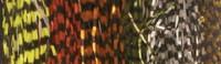 Speckled Centipede Legs