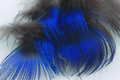 Peacock Body Plumage