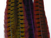Dyed Ringneck Pheasant Tails