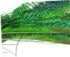 Natural Peacock Swords 6